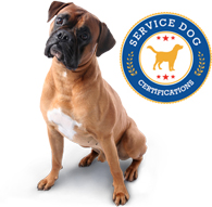 service-dog-certifications-online