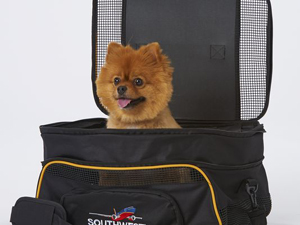 travel with your dog airplanes