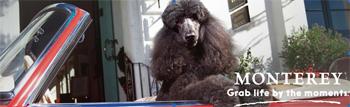 Dog Friendly Vacation House Rentals Sonoma Coast